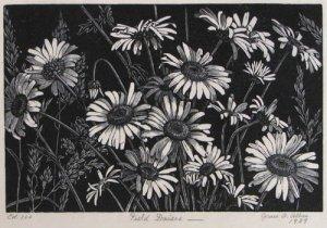 Albee | Field Daisies