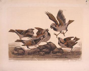 Hackett | Sparrows