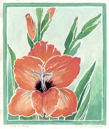 Towne | Gladiolus