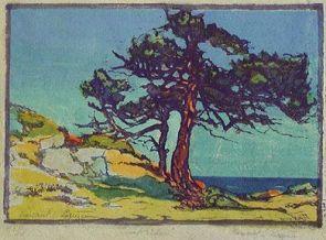 Patterson | Coast Cedars