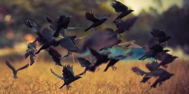 Crows Wherever I Land | Ravitte Kentwortz