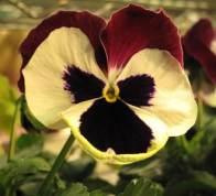 The Little Flower   Susan Powers Bourne