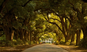 Oak Alley Mobile AL