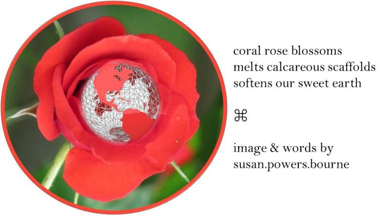 coral-rose