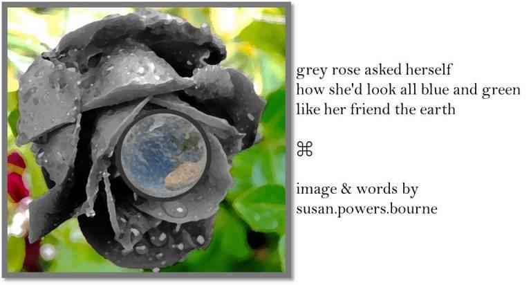 grey-rose