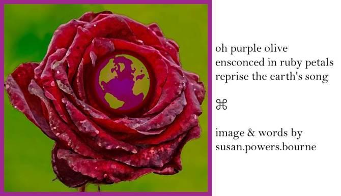 oh-purple-olive