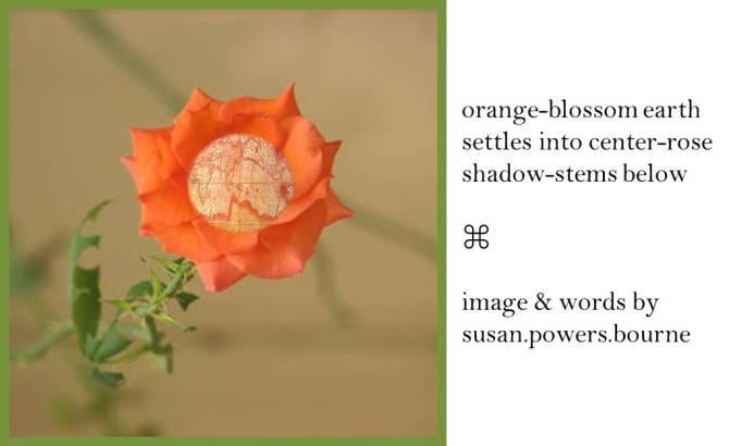 orange-blossom
