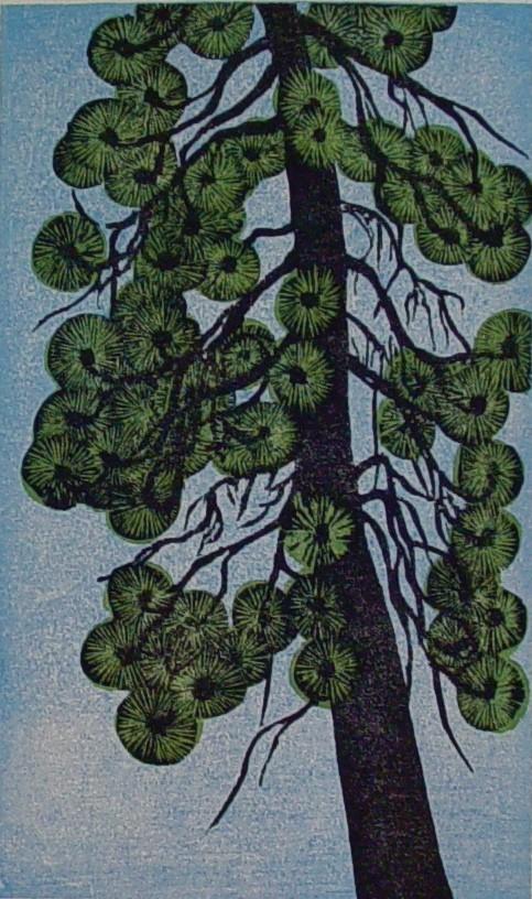 Arlington Ponderosa Pine