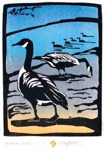 Bowen Canada-geese