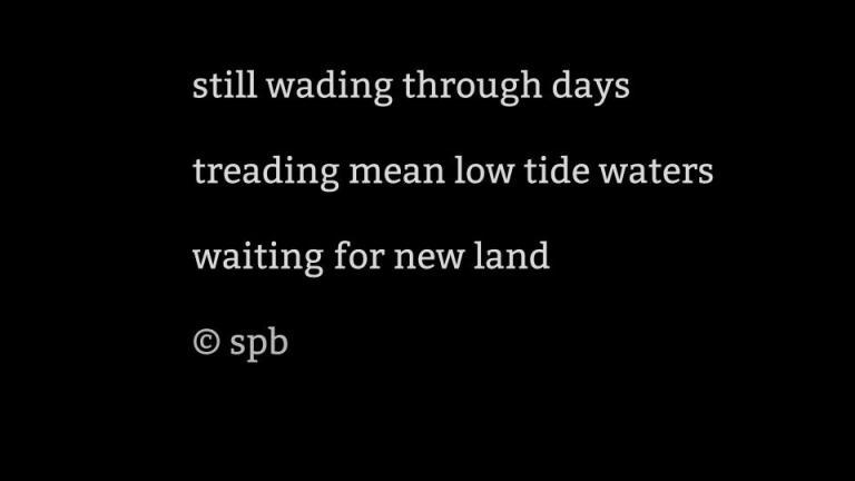 still wading.jpg