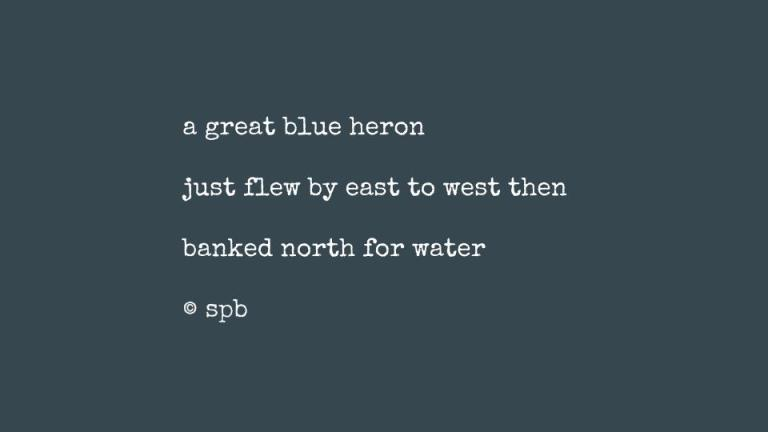 a great blue