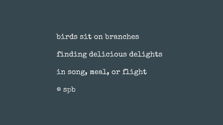 birds sit