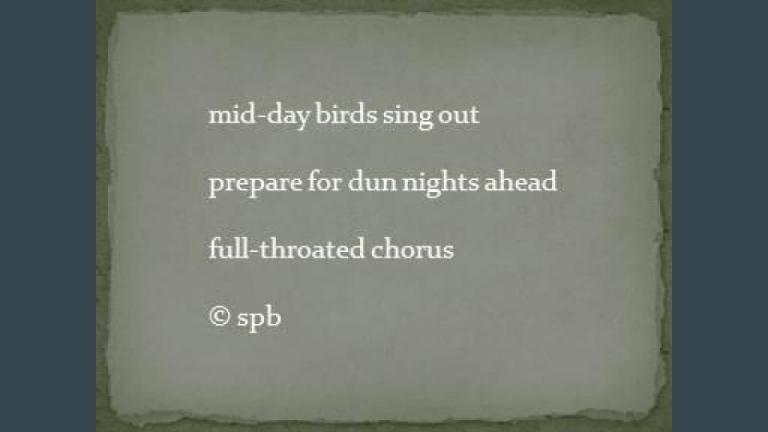 mid-day birds